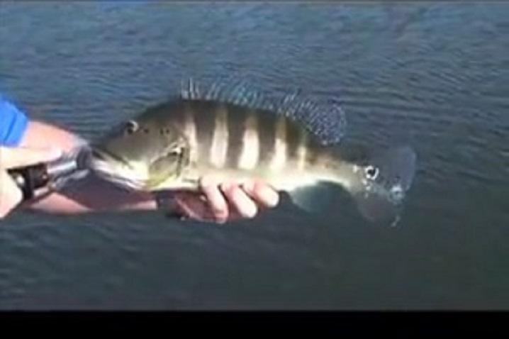 lago do peixe tucunare azul